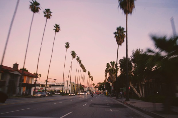 Palm Trees, Los Angeles